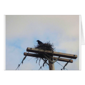 Het Nest van kraaien in Ak Wenskaart