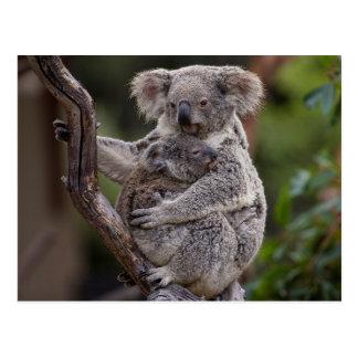Het nestelen vanzich Koala's Briefkaart