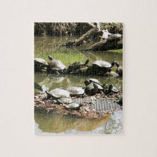 Het Netwerk van de schildpad Puzzel