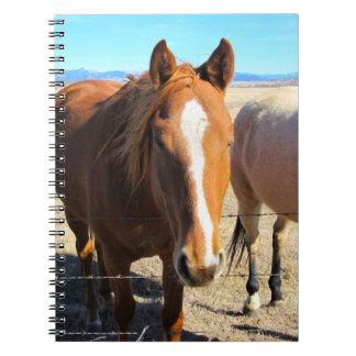 Het Notitieboekje van het paard Ringband Notitieboek