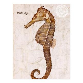 Het oceaan Vintage Schepsel Seahorse van het Briefkaart