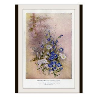 Het omzoomde Botanische Briefkaart Wildflower van