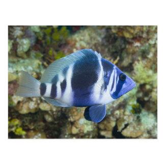 Het onderwater Leven, VISSEN:  Het Gehucht van de Briefkaart