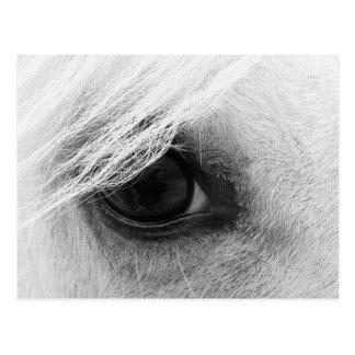 Het Oog van het paard in Zwart-wit Wens Kaarten