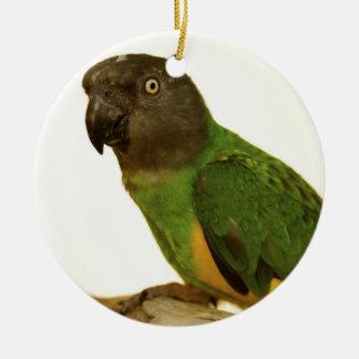 Het Ornament van de Papegaai van Senegal