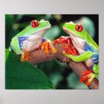 Het Paar van Red Eye Treefrog, callidryas Agalychi Posters