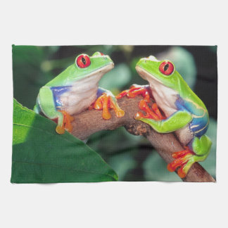 Het Paar van Red Eye Treefrog, callidryas Theedoek