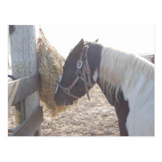 Het Paard Pinto van de verf Briefkaart