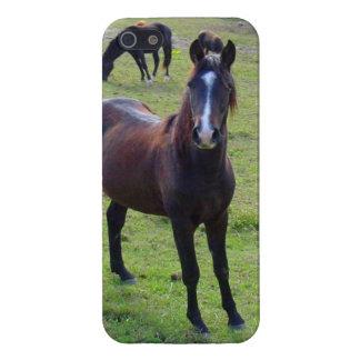 Het Paard van Tennessee iPhone 5 Hoesje