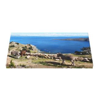 Het paradijs van ezels canvas afdrukken