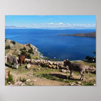 Het paradijs van ezels poster
