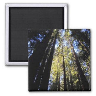 Het Park van de Staat van de Californische sequoia Magneet