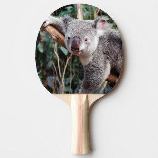Het Park van het Wild van Featherdale, Koala's Tafeltennis Bat