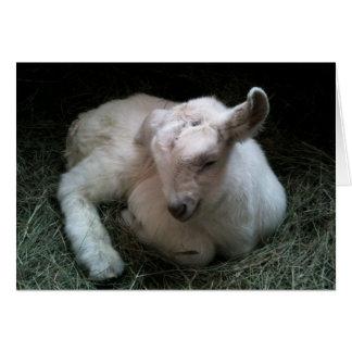 Het pasgeboren wenskaart van het geitkind