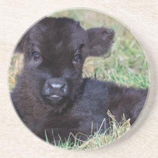 Het pasgeboren zwarte Schotse Hooglanderkalf Zandsteen Onderzetter