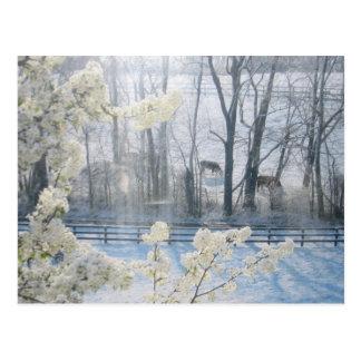 Het pastorale Landschap van de Natuur in de Winter Briefkaart