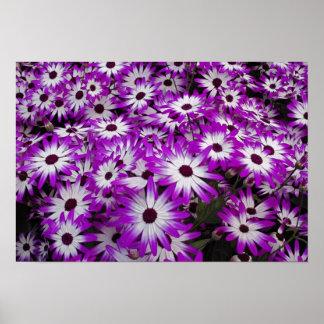 Het patroon van de bloem, Kuekenhof Tuinen, Lisse, Poster