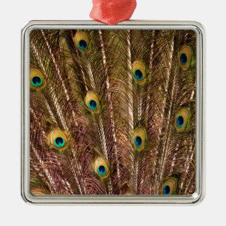 Het Patroon van de Veer van de pauw Zilverkleurig Vierkant Ornament