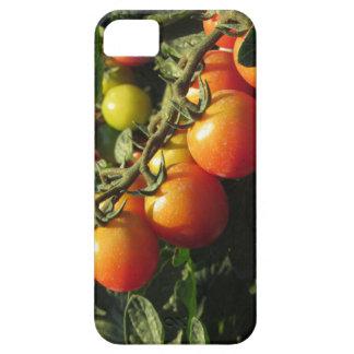 Het plant dat van de tomaat in de tuin groeien. barely there iPhone 5 hoesje