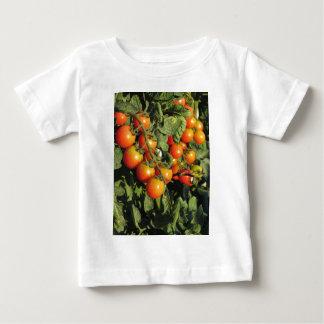 Het plant die van de tomaat in de tuin groeien baby t shirts