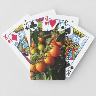 Het plant die van de tomaat in de tuin groeien. poker kaarten