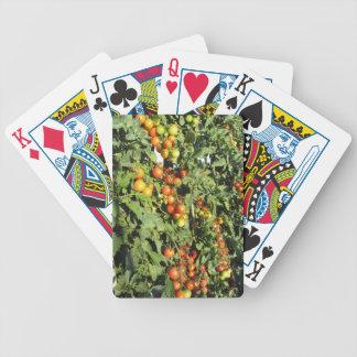 Het plant die van de tomaat in de tuin groeien poker kaarten