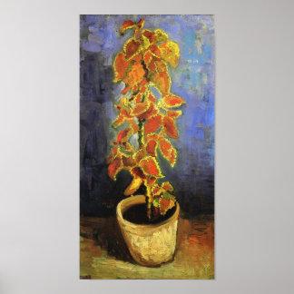 Het Plant van de siernetel in een Fine Art. van de Poster