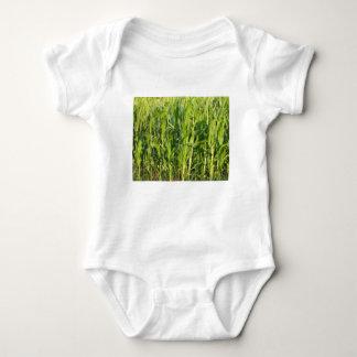 Het plant van de zoete maïs groeit in de zomer romper
