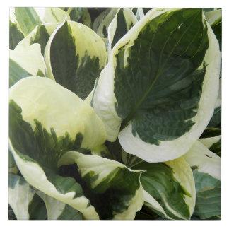 Het Plant van Hosta Bloemen Tegeltje