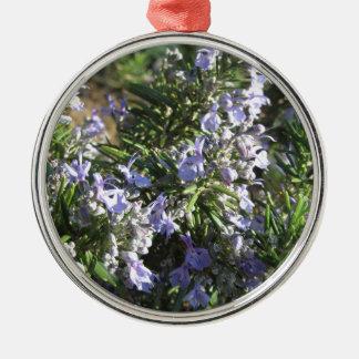Het plant van Rosemary met bloemen in Toscanië, Zilverkleurig Rond Ornament