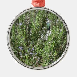 Het plant van Rosemary met bloemen. Toscanië, Zilverkleurig Rond Ornament