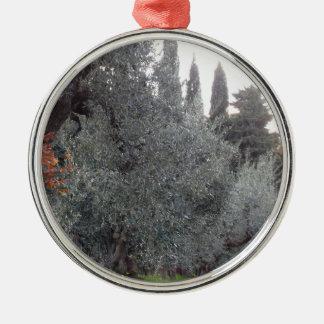 Het platteland van de herfst met olijfbomen zilverkleurig rond ornament