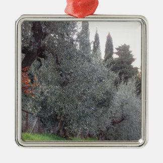 Het platteland van de herfst met olijfbomen zilverkleurig vierkant ornament