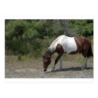 Het Pony van Chincoteague Briefkaart