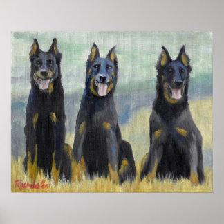 Het Portret van de Hond van Beauceron Poster