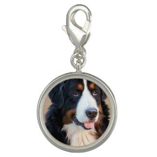 Het Portret van de Hond van de Berg van Bernese Charm