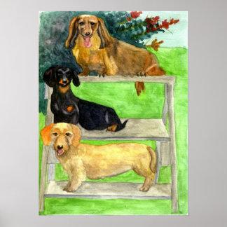 Het Portret van de Hond van de tekkel Poster