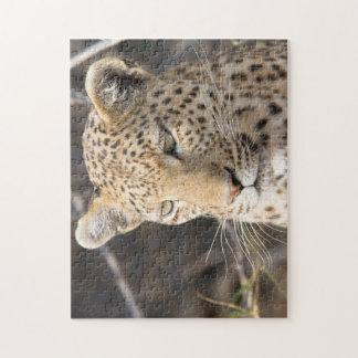 Het portret van de luipaard puzzels