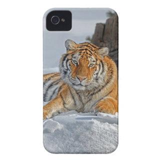 Het Portret van de Sneeuw van de tijger iPhone 4 Case