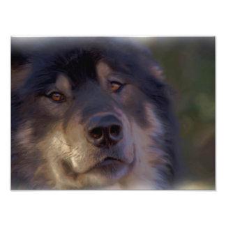 Het portret van een Wolf Fotoprints