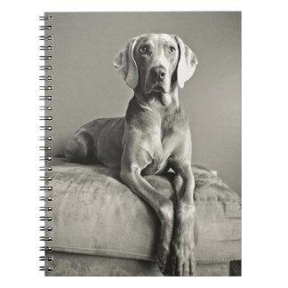 Het Portret van Weimaraner Notitieboek