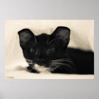 Het Poster van Cuteness van het Kat van de smoking