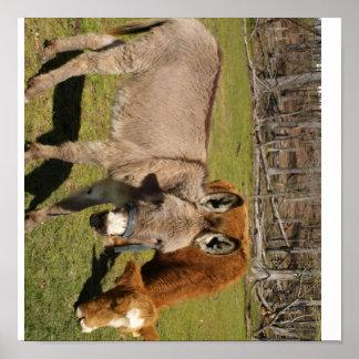 Het Poster van de ezel en van de Koe