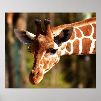 Het Poster van de giraf - de Dieren van de