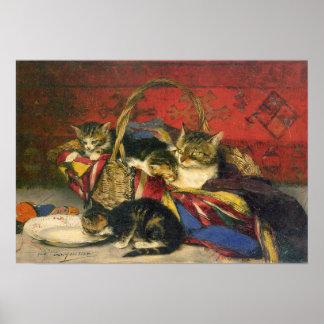 Het Poster van de Kat en van de Katjes van de