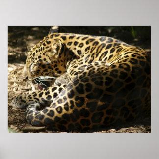 Het Poster van de luipaard