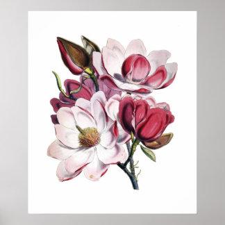 Het poster van de magnolia