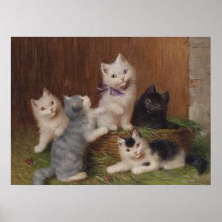 Het Poster van de Steen van vijf Katjes