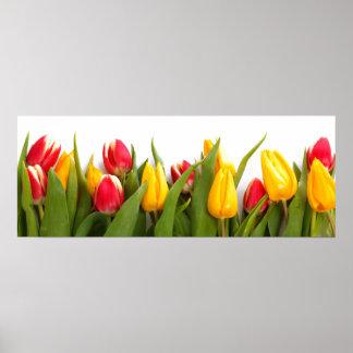 Het Poster van de Tuin van de tulp
