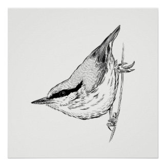 Het Poster van de vogel/Nuthatch van de Kunst van